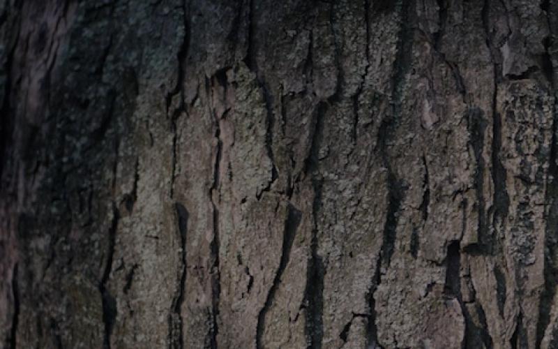 Дерево, решения