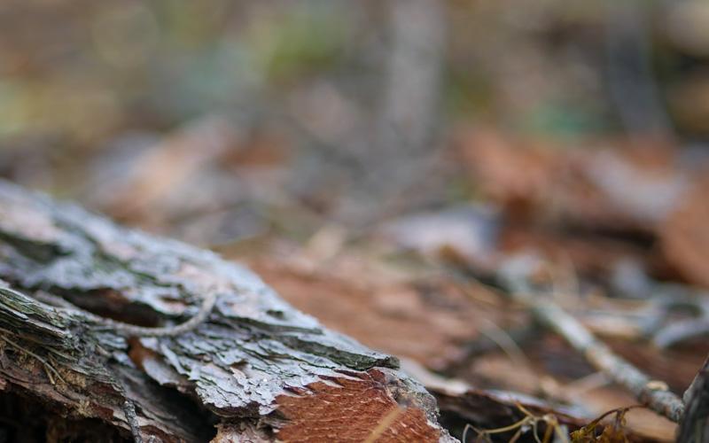 Лес. Кризис среднего возраста для мужчины