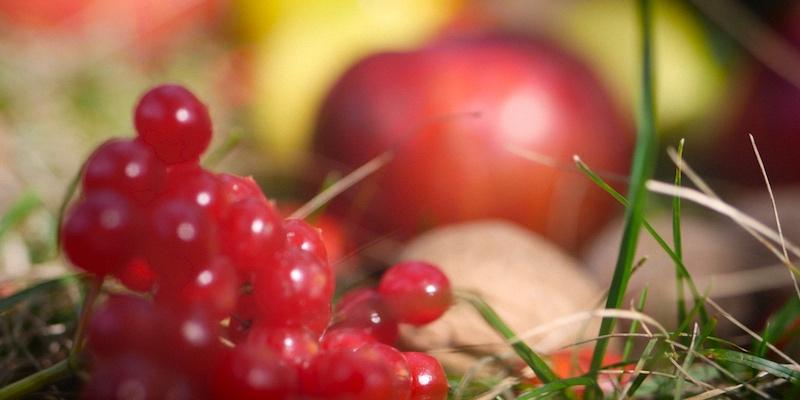ягоды, яблоко