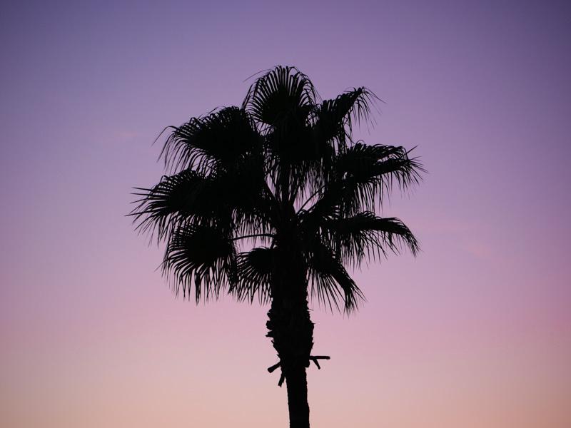 Пальма, тритфилд